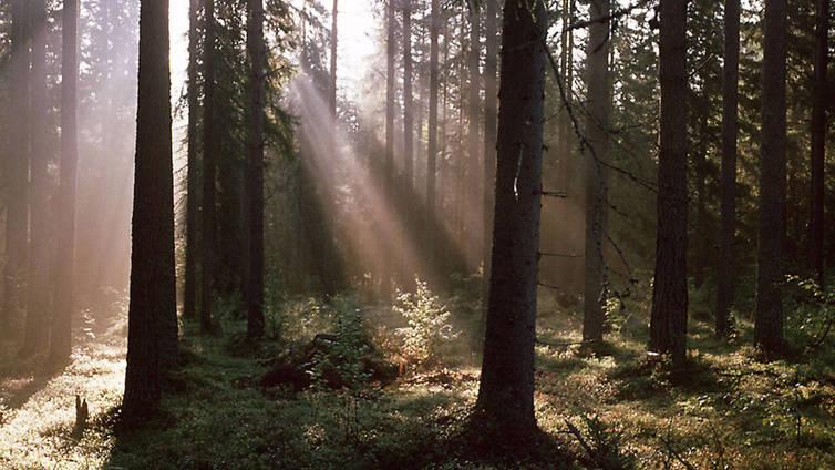 Tutkimus: metsä on mahtava stressilääke