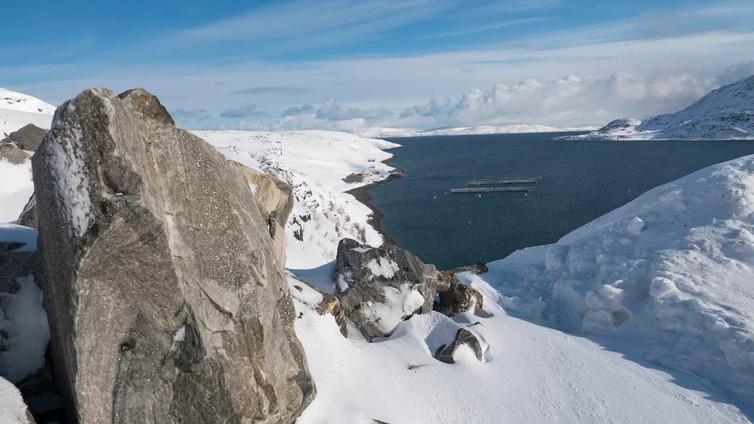 Ilmastonmuutos aiheuttaa Jäämeren eläimille sopeutumiskamppailun