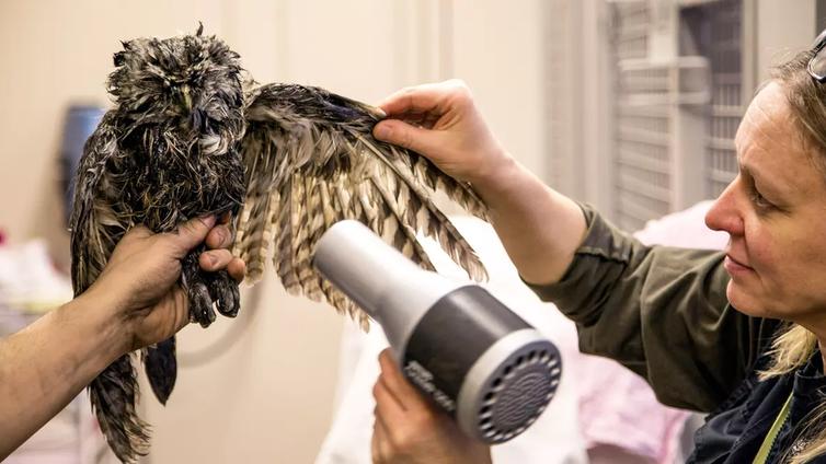 Hädänalaista eläintä on autettava – hoitokulut jää hoitajan maksettaviksi