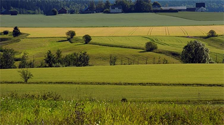 Itämerta suojellaan peltojen suojavyöhykkeillä