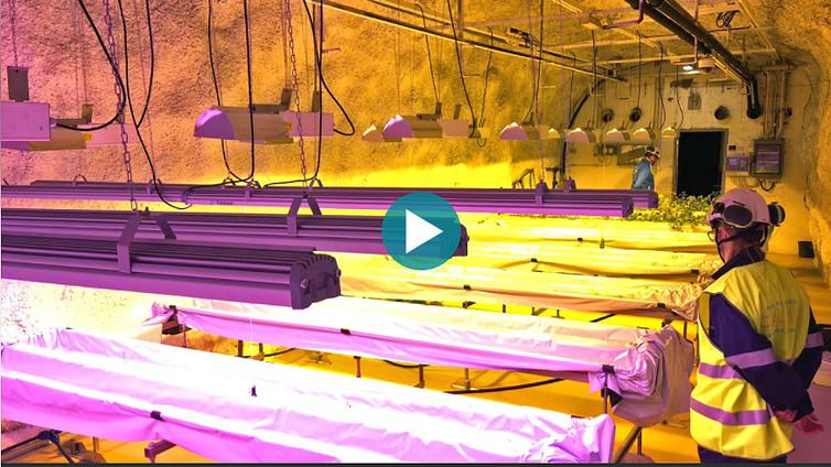 Suomalaisen kaivoksen syvyyksissä kasvatetaan perunaa