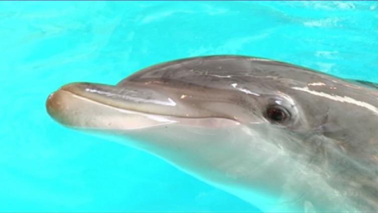 Särkänniemen delfinaario suljetaan - eläimille etsitään uutta paikkaa