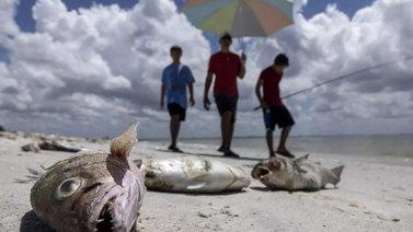 Myrkylliset leväkukinnat piinaavat Floridan rantoja