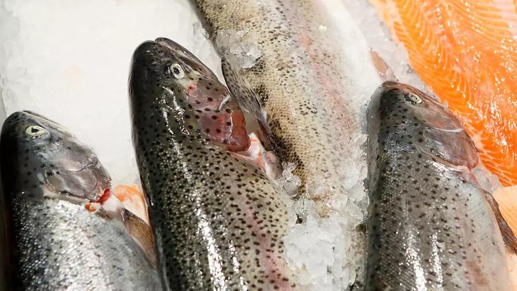 Suomeen nousee mullistavia kalankasvattamoja
