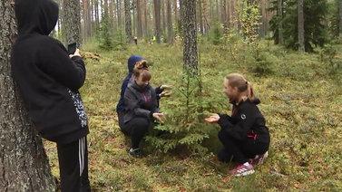 Mieli rauhoittuu ja liikunta lisääntyy, kun oppitunti pidetään metsässä