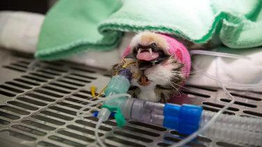 Lemmikkieläinten hoito avaa omistajien kukkaron nyörit