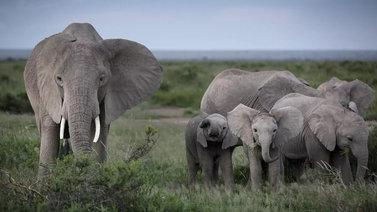 Selkärankaisten eläinten määrä maapallolla vähentynyt hälyttävästi
