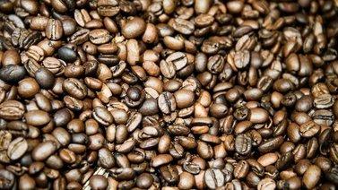 Yli puolet villinä kasvavista kahvilajeista uhkaa kadota ilmastonmuutoksen takia
