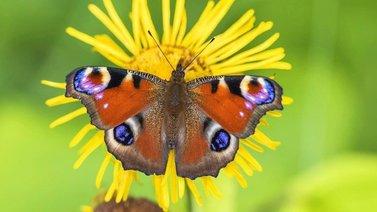 Tutkimus: Nykyisellä vauhdilla hyönteiset katoavat maailmasta sadassa vuodessa