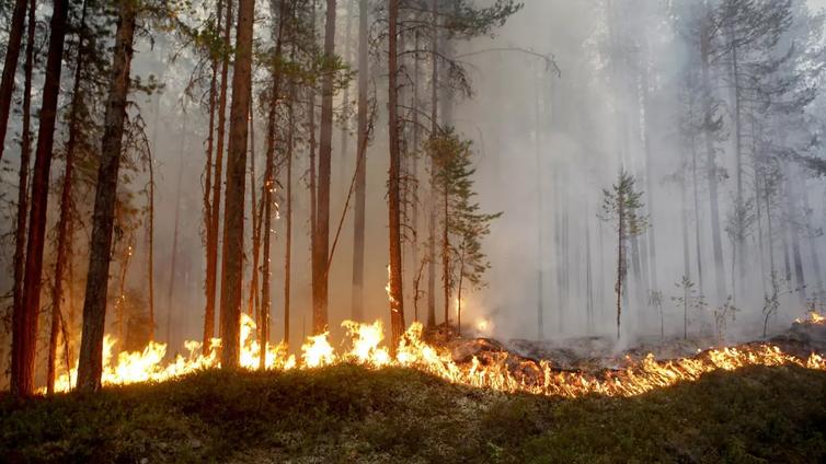 Ilmastotutkija: Hyönteistuhot, metsäpalot ja kuivuus uhkaavat Suomen metsiä ilmaston lämmetessä