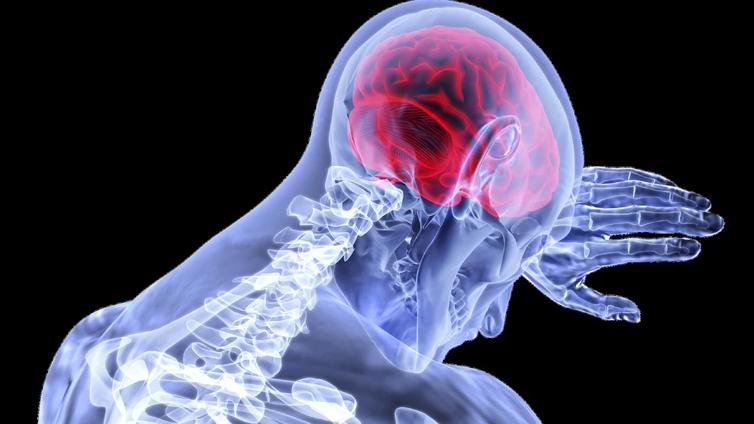 Nauru lepuuttaa stressaantuneita aivoja