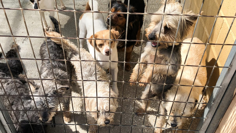 Espanjassa hylättiin viime vuonna yli 100 000 koiraa