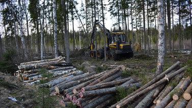 Ahvenanmaa kärsii edelleen alkuvuoden myrskytuhoista
