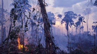 Suuret palot tuhoavat maailman keuhkoiksi kutsuttua Amazonin sademetsää