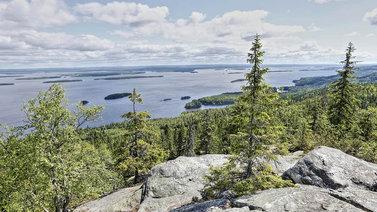 Suomen luonnon päivä sai ihmiset lähtemään metsään