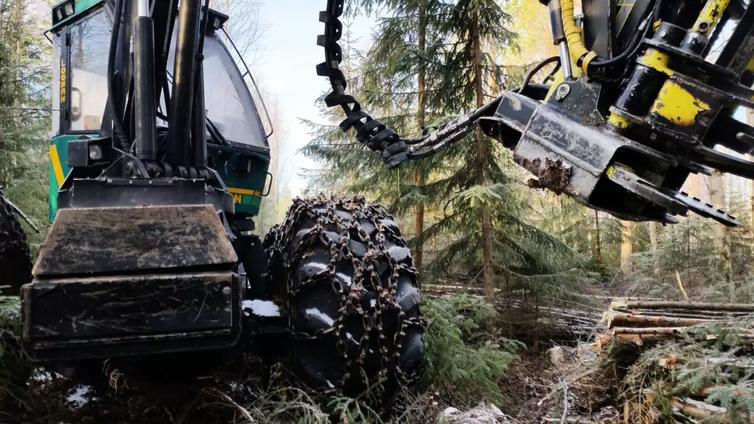 Valtaosa suomalaisista ei lisäisi metsänhakkuita nykyisestä