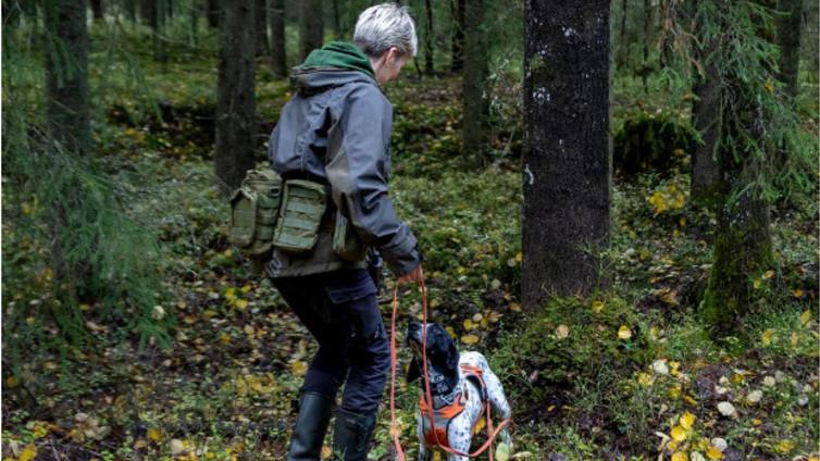 Koiria testataan uhanalaisen liito-oravan kartoituksessa