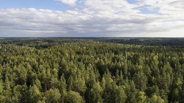Ulkomaiset puulajit hyödyttäisivät Suomen metsiä ja ilmastoa