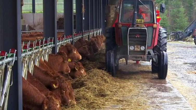Lihantuottajiin kohdistuva syyllistäminen ilmastoasioissa aiheuttaa henkistä stressiä