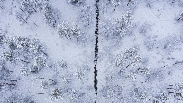 Pohjoisen selluhankkeita varjostavat isot ympäristöriskit