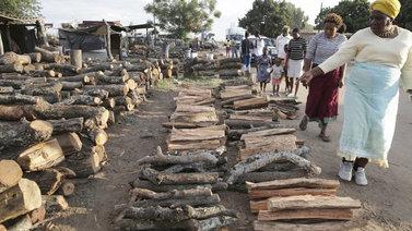 Runsas puunkäyttö uhkaa Kenian viimeistä sademetsää