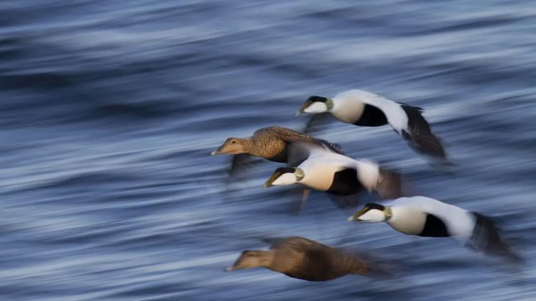 Lintujen elämä ei ole entisellään – se kertoo koko ekosysteemin muutoksesta