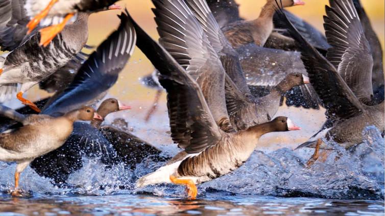 Lintujen kevätmuutto on alkanut ennätyksellisen aikaisin
