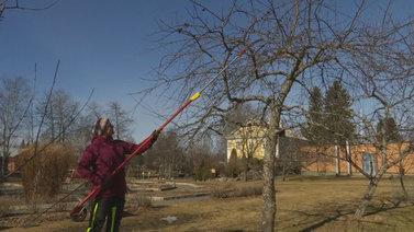 Puutarhanhoito saa ajatukset pois ikävistä asioista