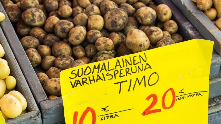 Kotimaista varhaisperunaa saadaan kauppoihin poikkeuksellisen aikaisin