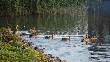 Tarinoita järviltä: Kesällä järvet kuhisevat elämää