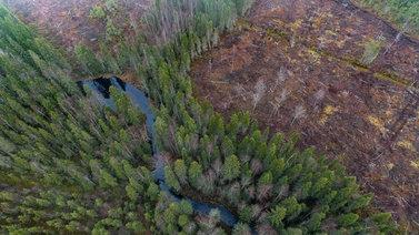 Talouskasvu syö luonnon monimuotoisuutta Suomessa