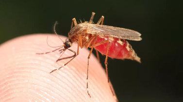 Tarinoita järviltä: Hyttyset syntyvät vedessä