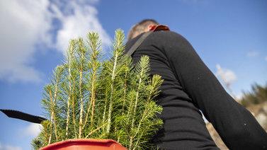 Ulkomaisten kausityöntekijöiden puute hidastaa metsänistutusta