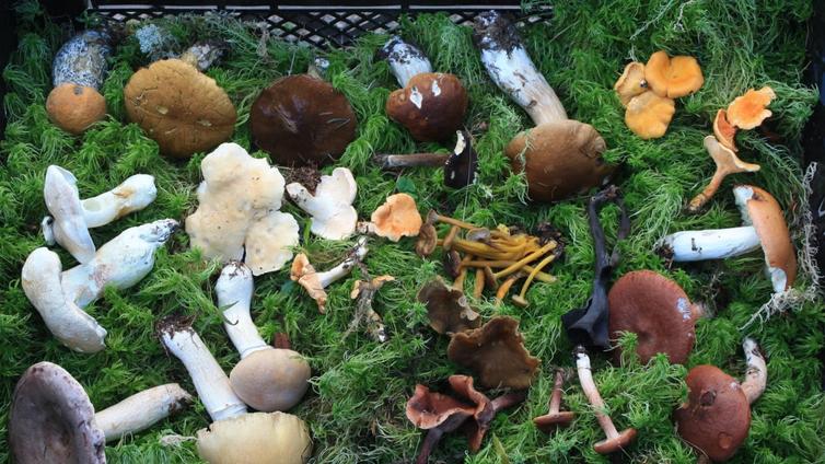 Sieniasiantuntija kannustaa ihmisiä hyödyntämään sieniä ympäri vuoden