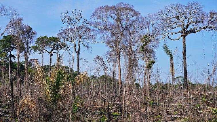 Brasilian metsät katoavat kiihtyvällä vauhdilla