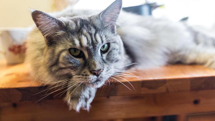Moni kissanomistaja tekee lemmikilleen ruokaremontin