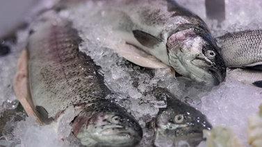 Suomalaiset haluaisivat syödä enemmän kotimaista kirjolohta
