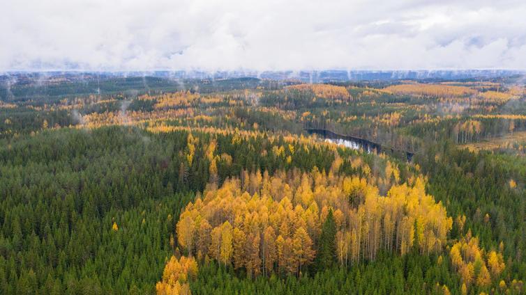 Suomi kaataa uhanalaisten lajien metsiä