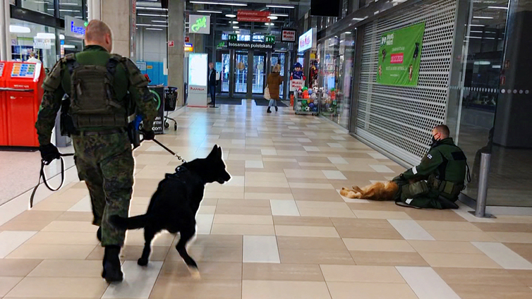 Sotakoira löytää kätkön hajujen sekamelskasta kauppakeskuksessa