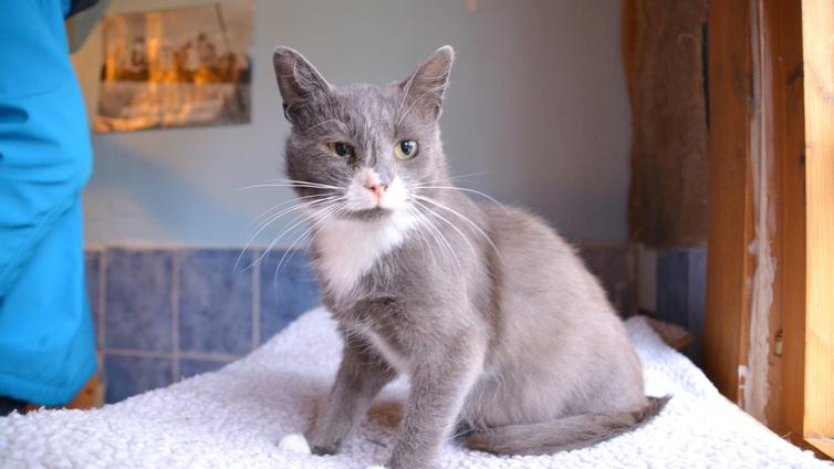 Suuriksi kasvaneet kissapopulaatiot työllistävät eläinsuojeluyhdistyksiä