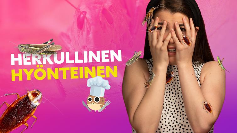 Yle Mix: Maistuisiko sirkat lautasella?