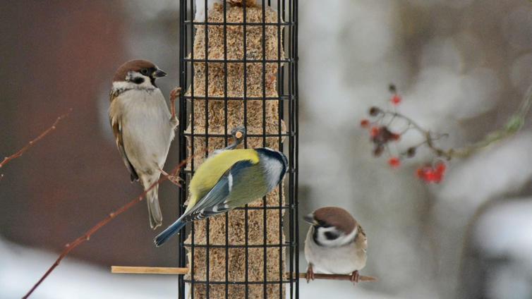Lintujen talviruokinta on muuttunut vuosikymmenten aikana