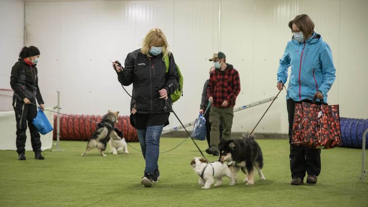Lemmikkibuumi lisännyt tarvetta koirien koulutukselle