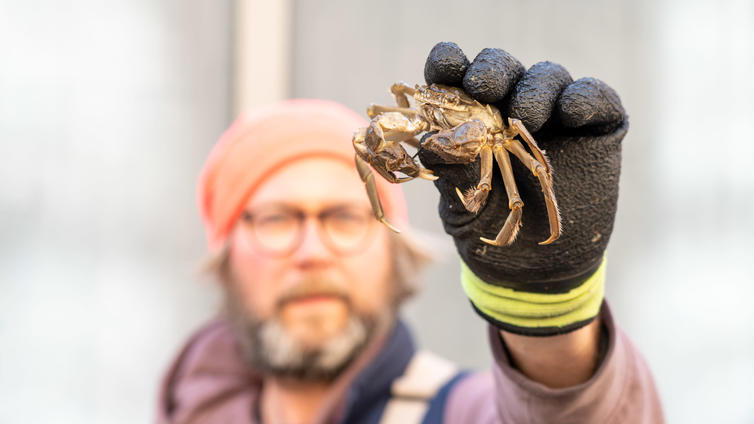 Tutkijat löysivät uuden syyn vieraslajien leviämiselle Suomeen