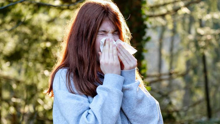 Siitepölyallergiasta voi päästä eroon uudella siedätyshoidolla