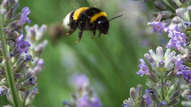 Suomen hyönteismaailma nopeassa muutoksessa