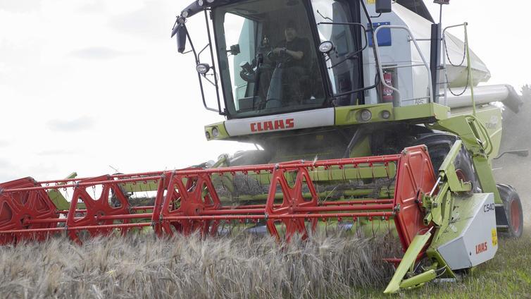 Kuivuus verottaa viljasatoa