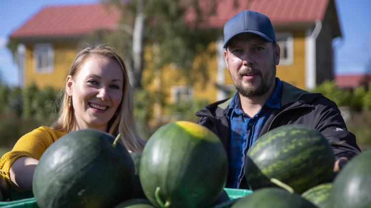 Tiesitkö, että vesimeloneja kasvatetaan myös Pohjanmaalla?