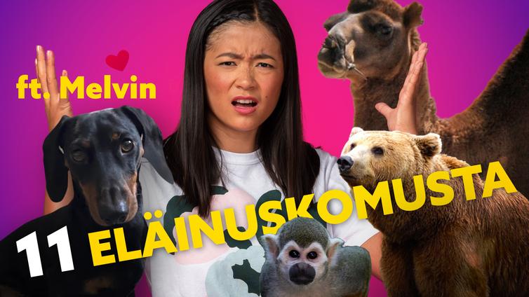 Yle Mix selvitti 11 eläinuskomusta
